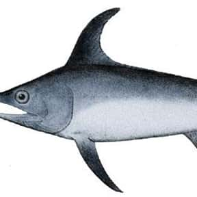 Swordfish is listed (or ranked) 15 on the list What Sea Creature Do You Want to Be?