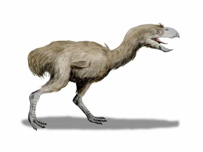 Phorusrhacidae is listed (or ranked) 2 on the list The Coolest & Weirdest Species of the Jurassic Period