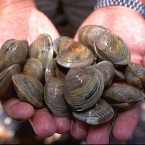 Clam is listed (or ranked) 18 on the list The BestPinot GrigioFood Pairings, Ranked