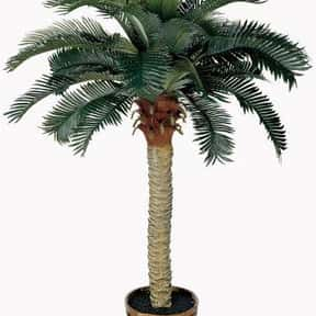 Nearly Natural 5043 Sago Silk Palm Tree