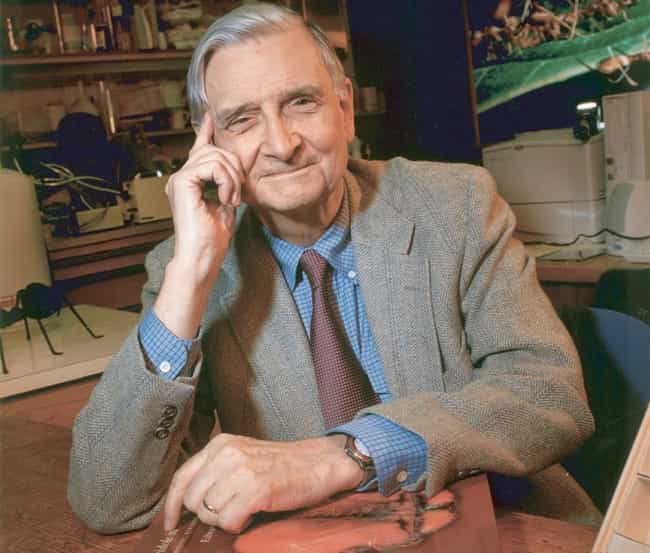 E. O. Wilson is listed (or ranked) 4 on the list Famous Male Conservationists