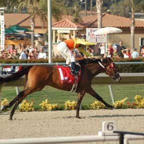 Joseph Talamo is listed (or ranked) 15 on the list List of Famous Jockeys