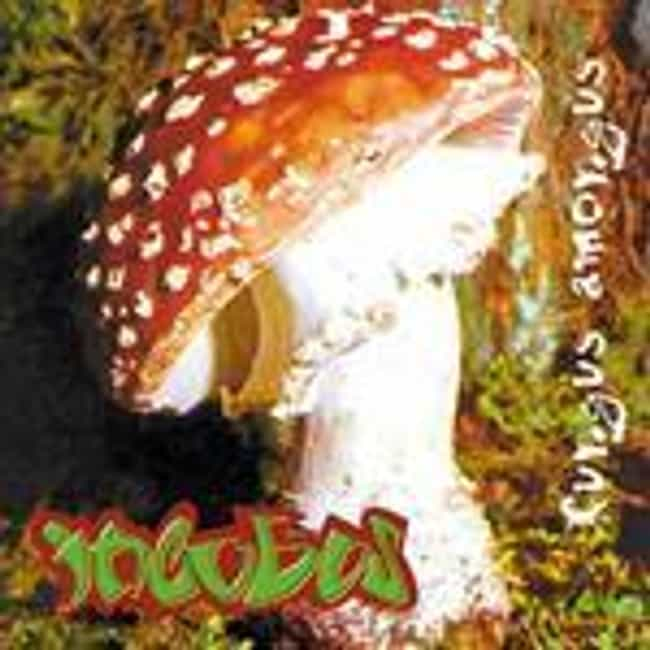 Fungus Amongus is listed (or ranked) 8 on the list The Best Incubus Albums of All Time