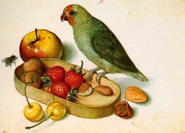 Georg Flegel is listed (or ranked) 2 on the list Famous Still Life Artists