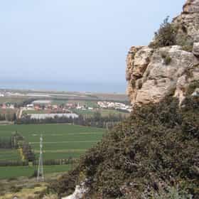 Israeli coastal plain