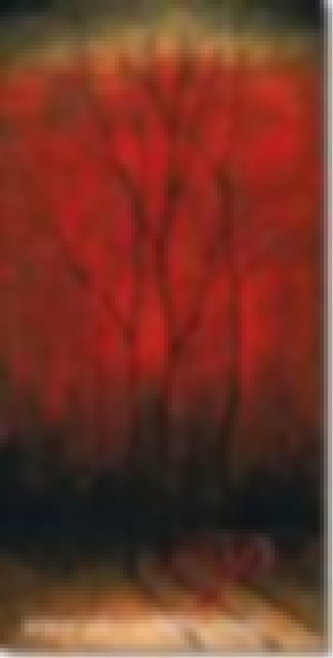 Black Trees on Red is listed (or ranked) 4 on the list Famous Landscape Arts from the Contemporary Art Movement