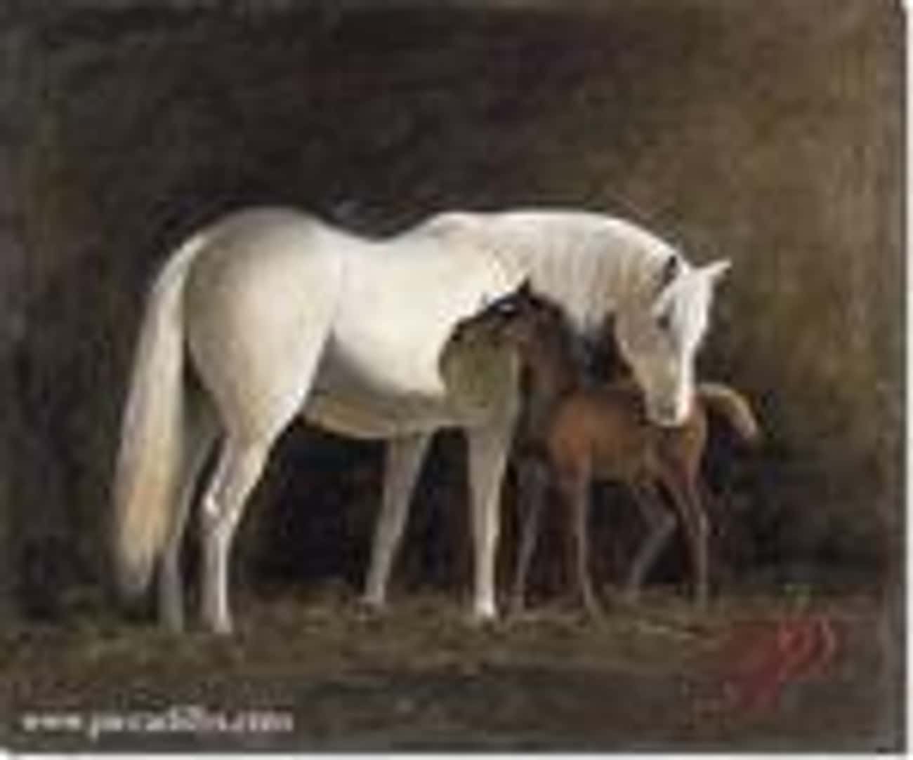 Mare & Colt is listed (or ranked) 3 on the list Famous Horse Art