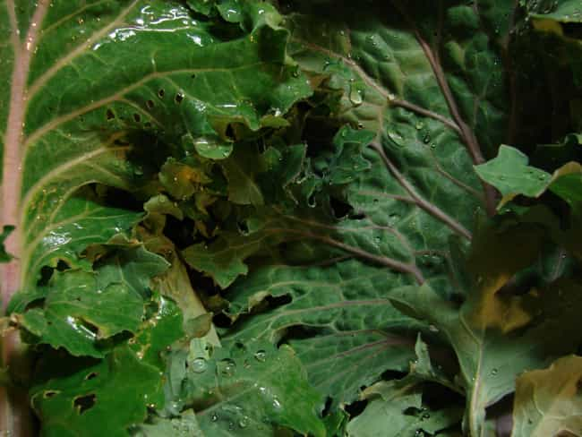Kale is listed (or ranked) 4 on the list The Best Foods for Diabetes