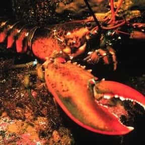 Lobster is listed (or ranked) 6 on the list The Best Food Pairings For Chardonnay, Ranked