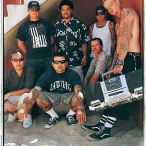 Long Beach Dub Allstars is listed (or ranked) 9 on the list The Best Bands Like Sublime