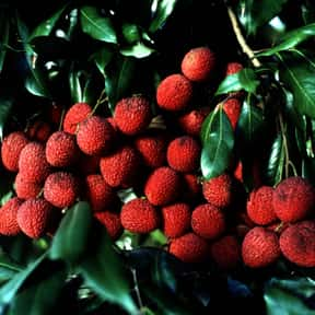 Lychee is listed (or ranked) 8 on the list The Best Tropical Fruits