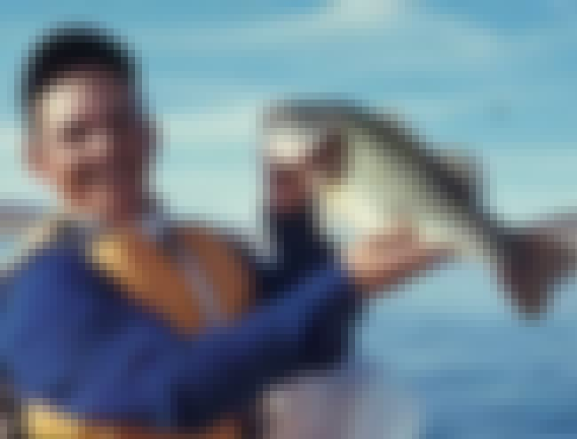 Bobby Murray is listed (or ranked) 8 on the list List of Famous Professional Sport Fishermans