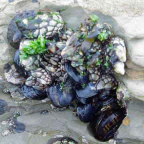 Mussel is listed (or ranked) 8 on the list All Low Carbohydrate Foods