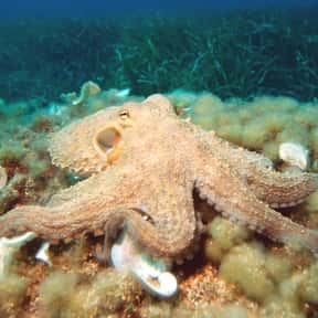 Octopus is listed (or ranked) 6 on the list What Sea Creature Do You Want to Be?
