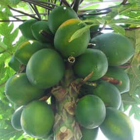 Papaya is listed (or ranked) 13 on the list The Best Tropical Fruits