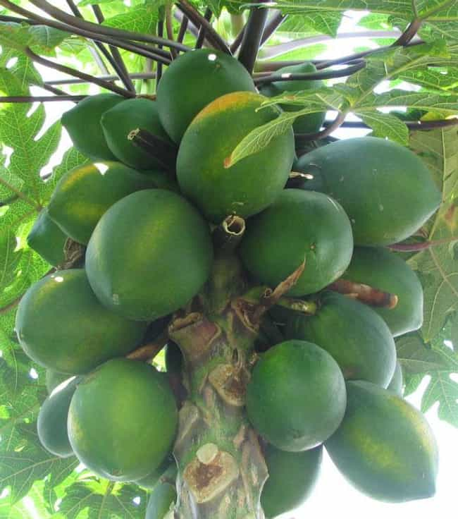 Papaya is listed (or ranked) 1 on the list 7 Fruits For Naturally Inducing Labor, Ranked By Moms