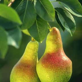 Pear is listed (or ranked) 14 on the list Low Fat foods