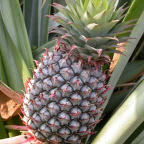 Pineapple is listed (or ranked) 2 on the list The Best Tropical Fruits