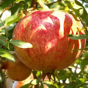 Pomegranate is listed (or ranked) 23 on the list Low Fat foods