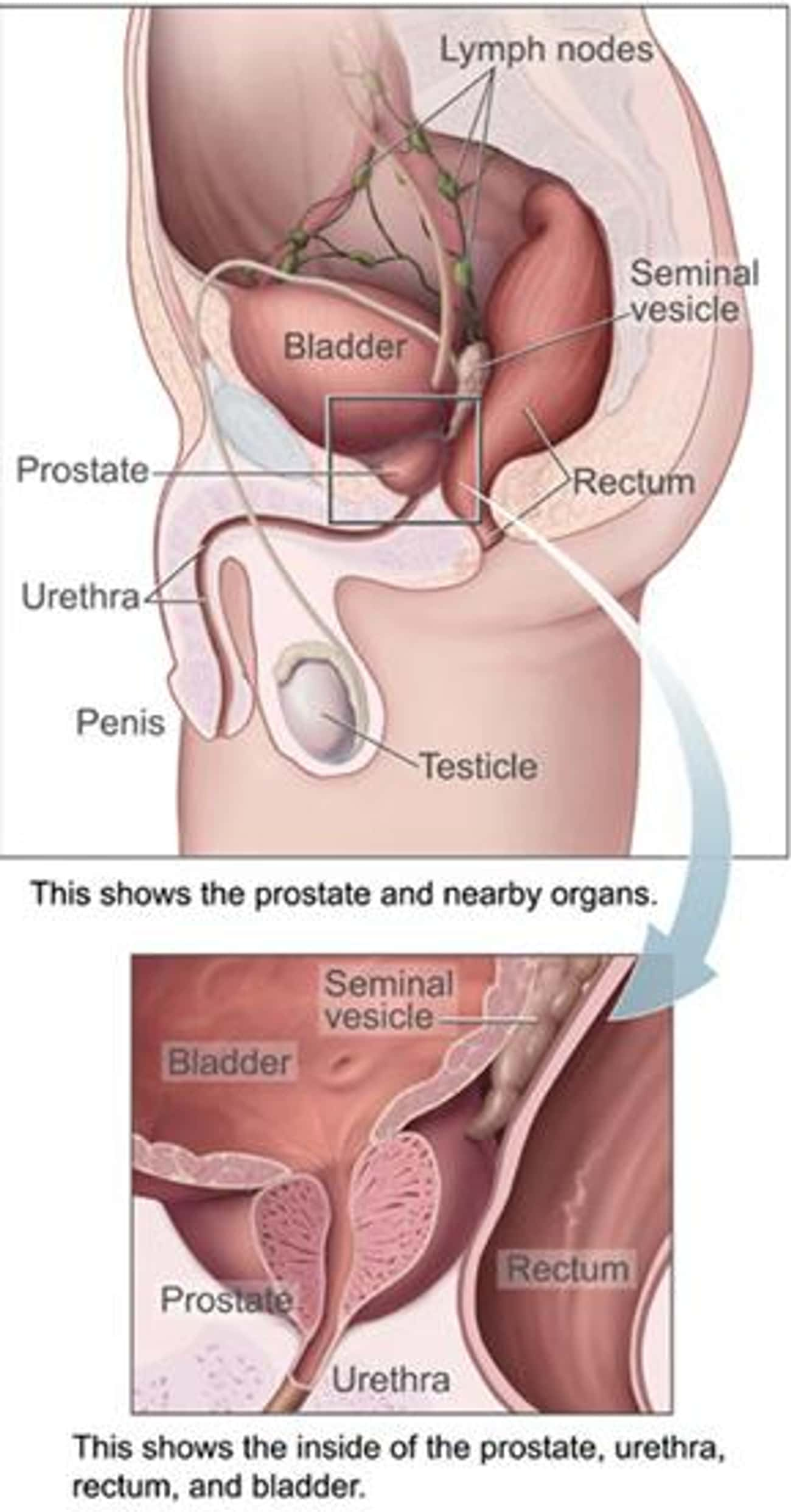 Prostatitis is listed (or ranked) 4 on the list Urinary System Diseases & Urinary Disorders