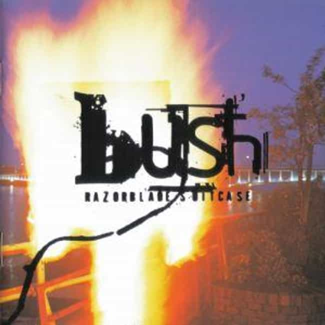 List of All Top Bush Albums, Ranked