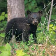 Blackbearhuntingontario