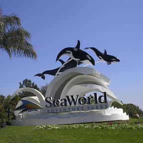 SeaWorld Orlando is listed (or ranked) 24 on the list The Best Of The Most Visited Tourist Destinations in America