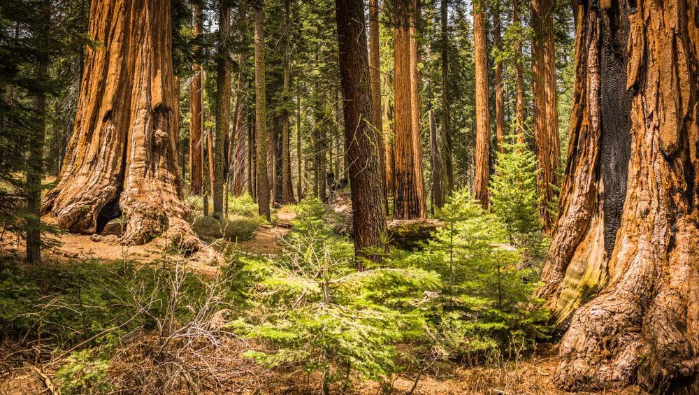 Sequoia National Park on Random Best Picture Of Each US National Park