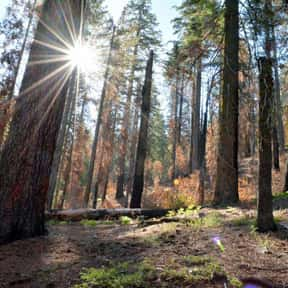 Sequoia National Park is listed (or ranked) 20 on the list The Best National Parks in the USA