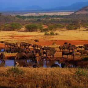 Serengeti National Park is listed (or ranked) 4 on the list The Most Beautiful Natural Wonders In The World