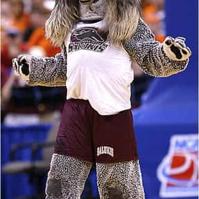 Southern Illinois University is listed (or ranked) 25 on the list Universities With The Dumbest College Mascots