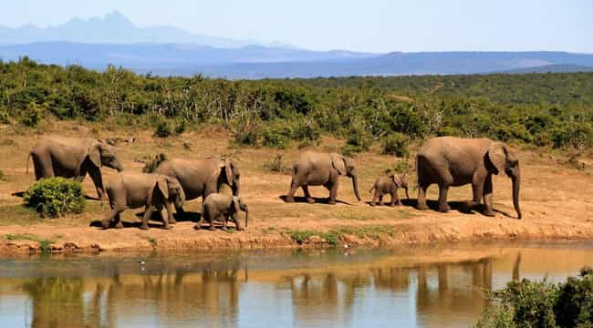 South Africa is listed (or ranked) 4 on the list The Best Countries for Safari Trips