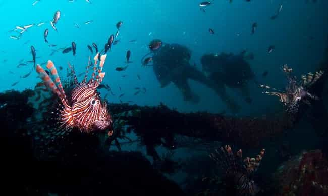 Sri Lanka is listed (or ranked) 4 on the list The Best Countries for Scuba Diving