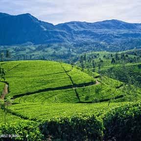 Sri Lanka is listed (or ranked) 17 on the list The Best Asian Countries to Visit