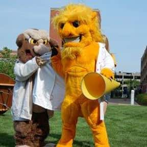 St. Louis College of Pharmacy is listed (or ranked) 8 on the list Universities With The Dumbest College Mascots