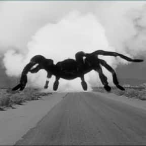 Tarantula is listed (or ranked) 6 on the list Movies That Have Spiders In Them