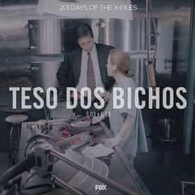 Teso Dos Bichos