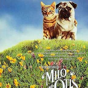 Milo & Otis is listed (or ranked) 7 on the list The Best Cat Movies