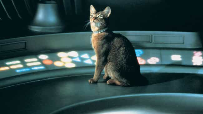The Cat from Outer Space... is listed (or ranked) 4 on the list The Most Absurd Things Animals Do In Live-Action Disney+ Movies