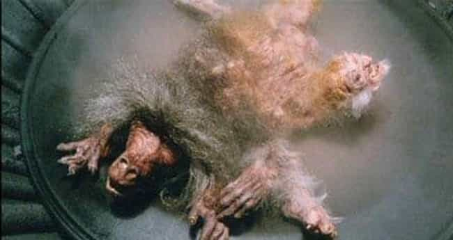 The Fly is listed (or ranked) 7 on the list Embarrassing Scenes That Were Wisely Cut From Sci-Fi Films