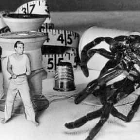 The Incredible Shrinking Man is listed (or ranked) 10 on the list Movies That Have Spiders In Them