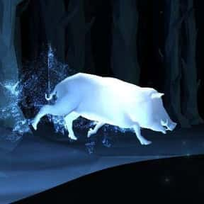 Ernie Macmillan - Boar is listed (or ranked) 21 on the list EveryPatronus In'Harry Potter,' Ranked By How Much You Wish It Was Yours
