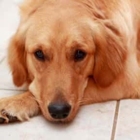 Thor is listed (or ranked) 4 on the list The Best Nerdy Names to Give Your Dog