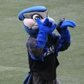 Ace is listed (or ranked) 15 on the list The Best Mascots in Major League Baseball