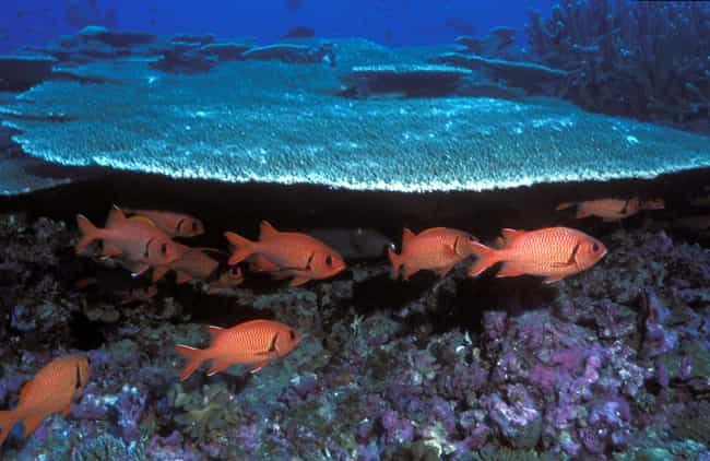 Pacific Remote Islands Marine ... is listed (or ranked) 6 on the list 26 National Monuments Trump Has On The Chopping Block
