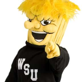 Wichita State University is listed (or ranked) 15 on the list Universities With The Dumbest College Mascots