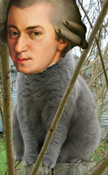 Mozart Enjoyed Being a Cat