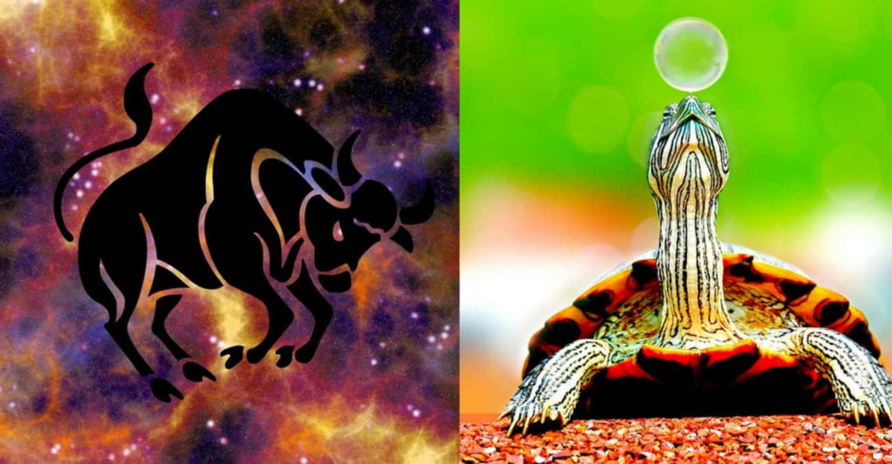 Taurus - Turtle is listed (or ranked) 2 on the list Your Ideal Pet According To Your Zodiac Sign