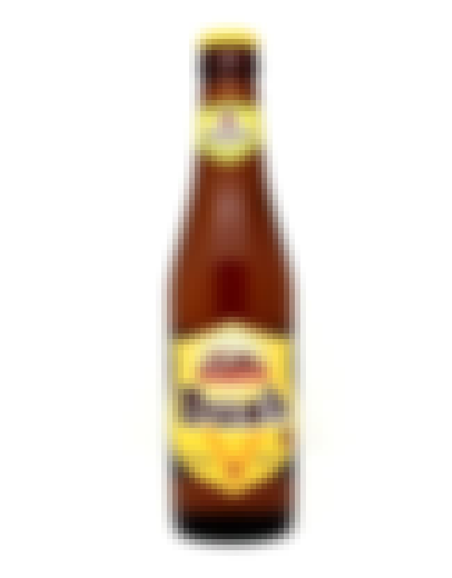 Dubuisson Bush Blonde is listed (or ranked) 4 on the list Beers with 10.5 Percent Alcohol Content
