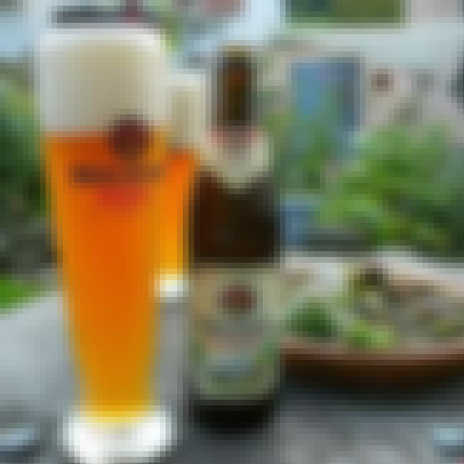 Burgerbraü Augsburg AG Musicus... is listed (or ranked) 4 on the list Beers with 6.9 Percent Alcohol Content